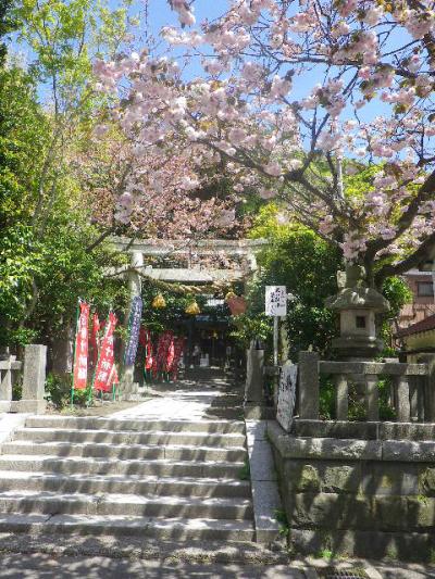 01)    17.04.23 鎌倉 大町「八雲神社」の八重桜
