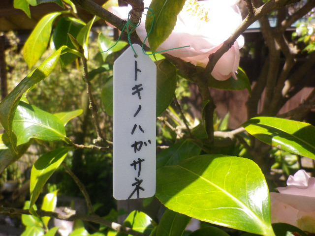 01-2) トキノハガサネ   _ 17.04.23 鎌倉「大巧寺」 晩春の庭