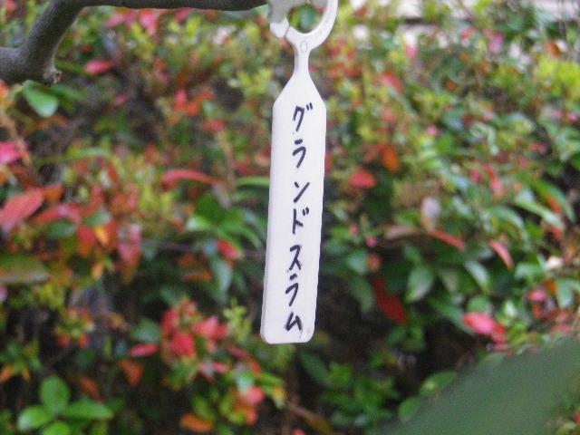 12-1) グランドスラム  _ 17.04.23 鎌倉「大巧寺」 晩春の庭