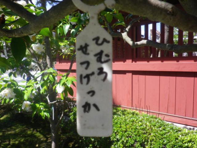 19-1) ひむろせつけっか  _ 17.04.23 鎌倉「大巧寺」 晩春の庭
