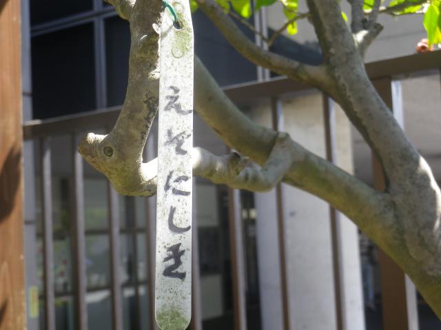 21-1) えぞにしき  _ 17.04.23 鎌倉「大巧寺」 晩春の庭