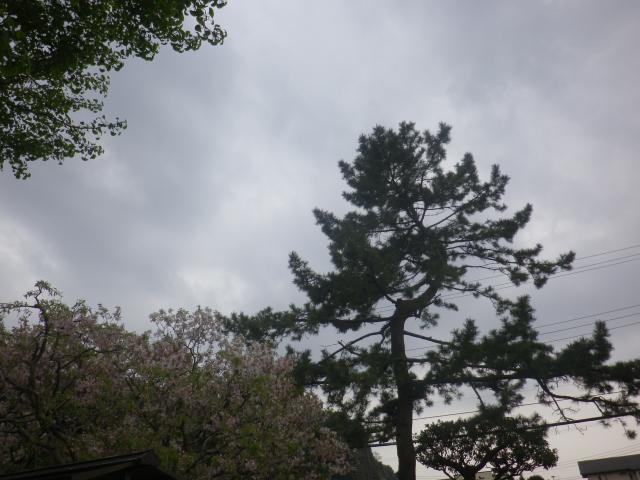 05)    17.04.22 鎌倉「千手院」の桜
