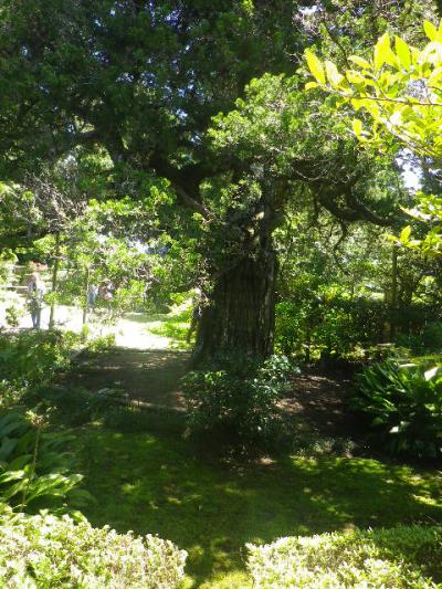 14-1)    17.05.05端午  鎌倉「寿福寺」立夏。 中門を潜ることができる期間の日。