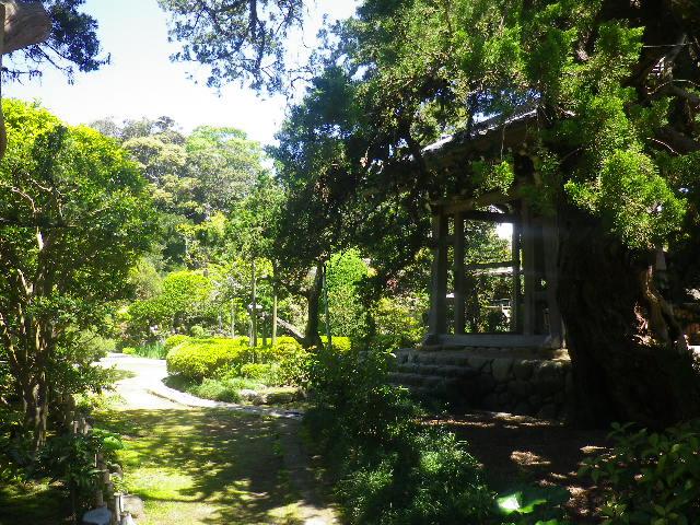 15-1)    17.05.05端午  鎌倉「寿福寺」立夏。 中門を潜ることができる期間の日。