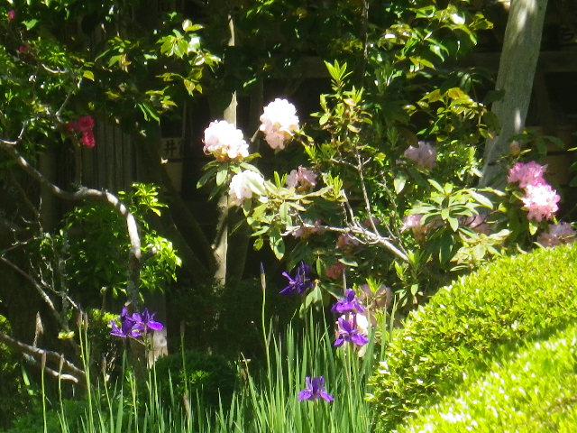 15-2)    17.05.05端午  鎌倉「寿福寺」立夏。 中門を潜ることができる期間の日。