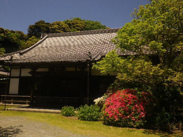 01-1)    17.05.05端午  鎌倉「浄光明寺」立夏