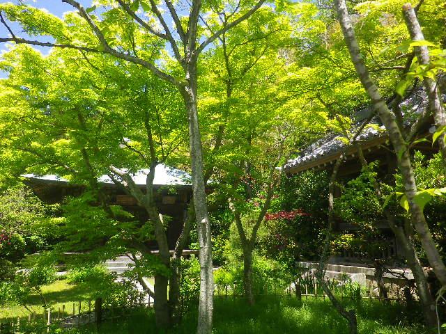 05)   17.05.05端午  鎌倉「浄光明寺」立夏