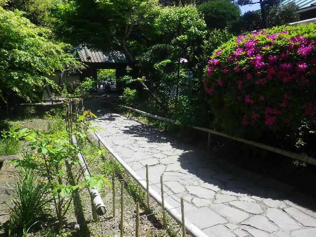 02-6)   山門前から惣門方向 17.05.05端午  鎌倉「英勝寺」立夏。