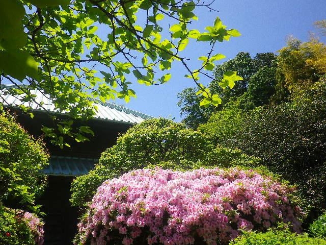 08-1)   呼び方を知らないが表と裏の、仏殿裏側方向。17.05.05端午  鎌倉「英勝寺」立夏。