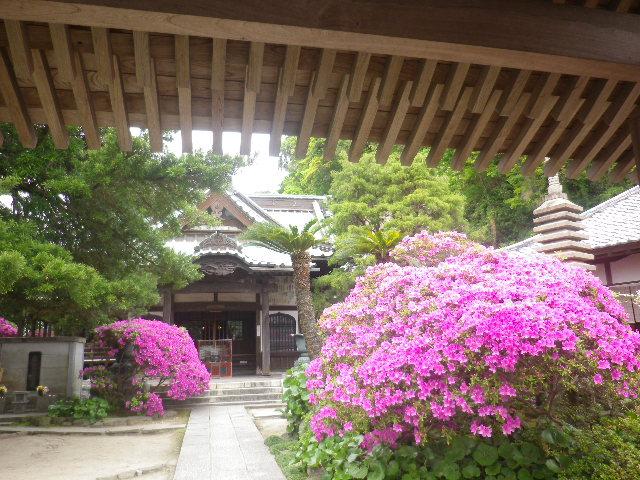 02)   17.05.09 鎌倉「安養院」の 咲き揃ったツツジ