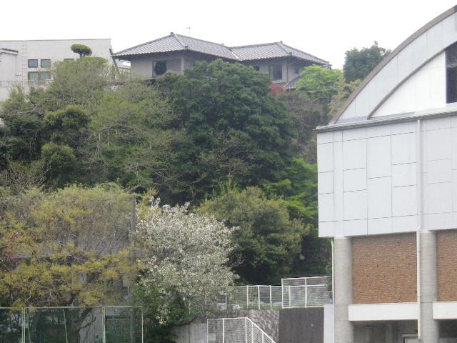 35-1) マンネリワンパターン打破!として、無理やりプール周辺の桜を撮った。   17.04.17 近所の山桜などをテキトーに撮った