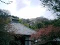 06) 鎌倉長谷「光則寺」。 本堂と海棠で樹齢200年の天然記念物