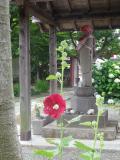 16)   17.06.09 鎌倉「千手院」参拝