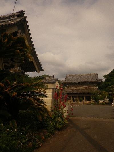 A02)  総門(惣門)外の右   17.06.14 鎌倉「光明寺」山門に向かって左側塀周辺の花