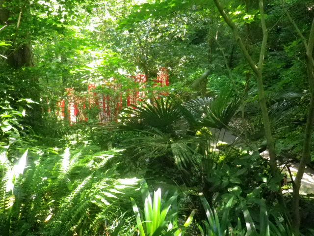 I01)  本殿撮影は憚り、 g01)からの合流山道を見おろす。  17.06.15 鎌倉「佐助稲荷神社」参拝