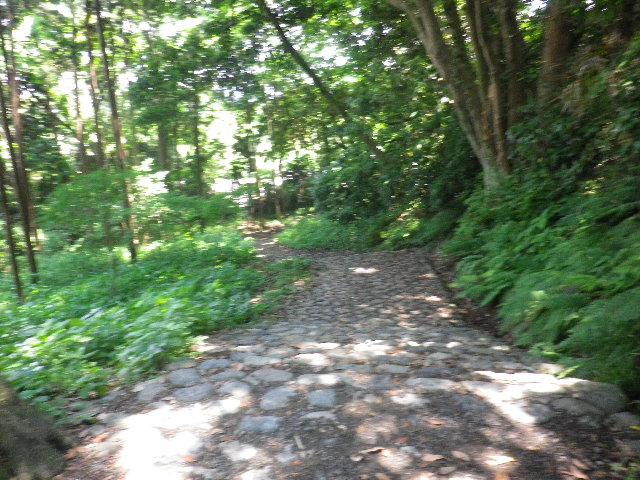 05-3) これまで 何故か?源氏山公園を ほとんどスルーしてきたけど、撮らずに進行してきた区域を含めて広大で知らぬ場所が多いことに気づいた。    17.06.15 鎌倉「源氏山公園」梅雨の合