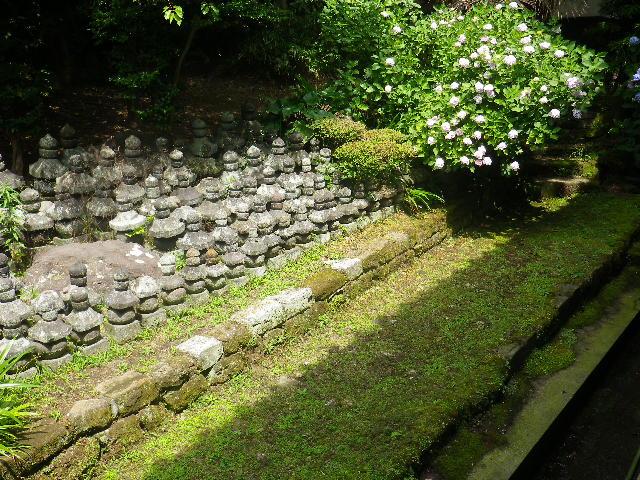 B01)  大殿左側    17.06.23 鎌倉「光明寺」記主庭園の蓮が咲き始めた