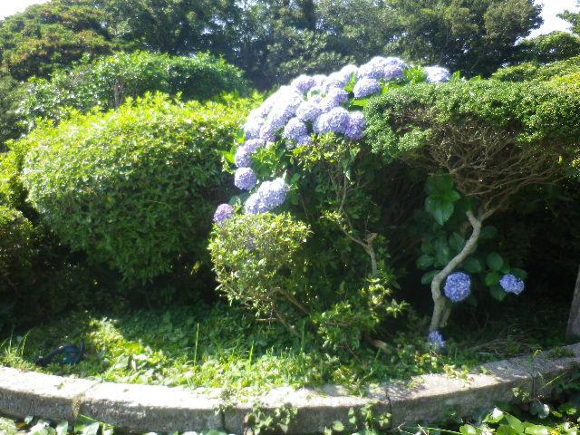 04-1)   17.07.07 逗子「披露山公園」 七夕とは関係なくテキトーに撮った