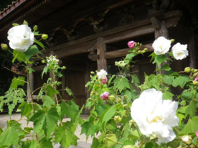 02-2)    17.09.29 鎌倉「英勝寺」
