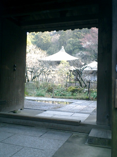 C04    07.02.21 鎌倉「瑞泉寺」梅の季節