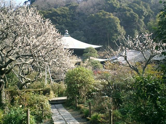 D05    07.02.21 鎌倉「瑞泉寺」梅の季節