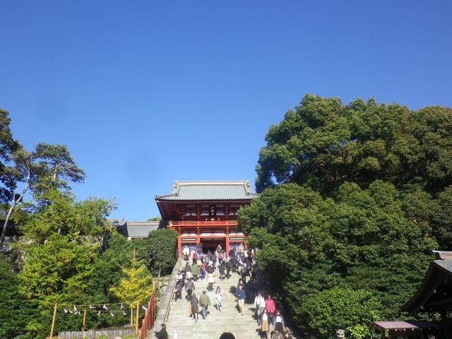 A01) 17.11.24 初冬の 鎌倉「鶴岡八幡宮」