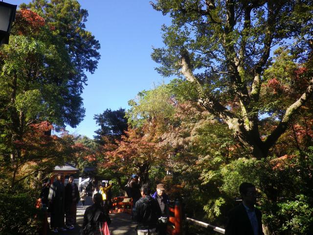 E02) 柳原神池の周辺 17.11.24 初冬の 鎌倉「鶴岡八幡宮」