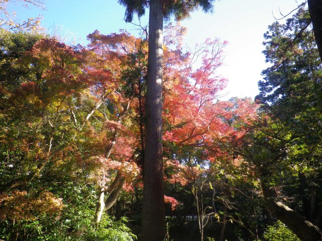E04) 柳原神池の周辺 17.11.24 初冬の 鎌倉「鶴岡八幡宮」