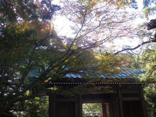 02)16.11.25 鎌倉「高徳院」アソコから覗いた