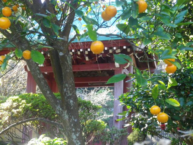 01-3)    17.11.25 初冬の鎌倉「光則寺」