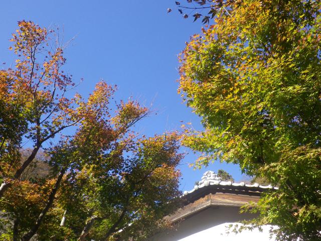 10)    17.11.25 初冬の鎌倉「光則寺」