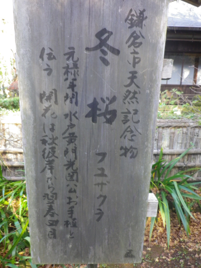 16-2)    17.11.24 初冬の 鎌倉「瑞泉寺」