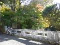 17.11.24 鎌倉、東勝寺跡~東勝寺橋~宝戒寺橋 周辺の紅葉は時期尚早だった。