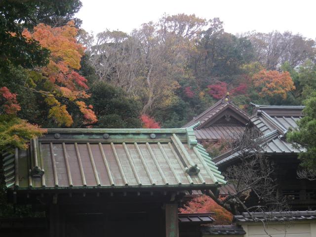 07) 写っている屋根は 総門 → 山門 → 鐘楼    17.11.30 鎌倉「英勝寺」塀の外から紅葉狩り
