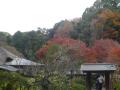 04-1)  17.11.30 紅葉の頃、鎌倉「浄智寺」/ 周辺
