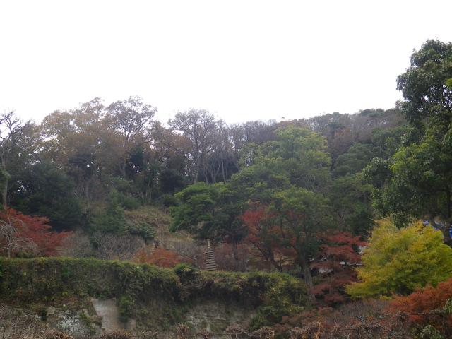 05)  多くの著名人が眠る高台の墓地方向   17.11.30 鎌倉「松嶺院」冬桜が咲く頃 _  「円覚寺」塔頭