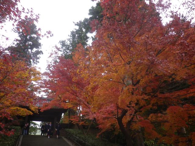 04-2) 総門前の階段周辺 17.11.30 紅葉の頃 鎌倉「円覚寺」 / 塔頭