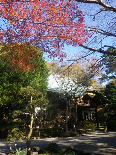 B01)  本堂周辺  17.12.06 鎌倉「妙本寺」紅葉の頃