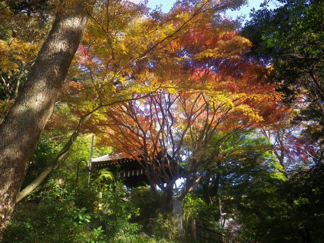 C01)  鐘楼周辺  17.12.06 鎌倉「妙本寺」紅葉の頃