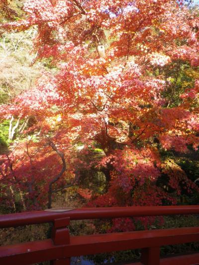 B05)     柳原神池の周辺   17.12.06 鎌倉「鶴岡八幡宮」銀杏が散って赤い葉が映える頃