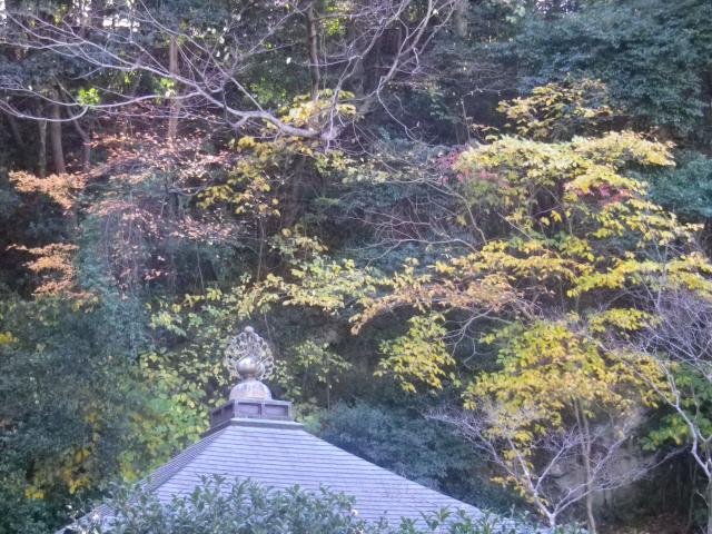08)   17.12.12 鎌倉「安国論寺」今日は富士山が見えたヨ