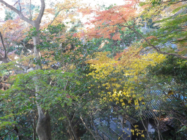 16)   17.12.12 鎌倉「安国論寺」今日は富士山が見えたヨ