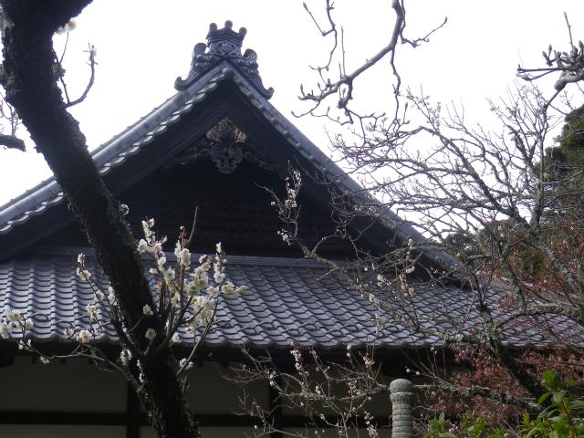 04-1) 18.02.23 鎌倉「浄光明寺」梅が咲く頃
