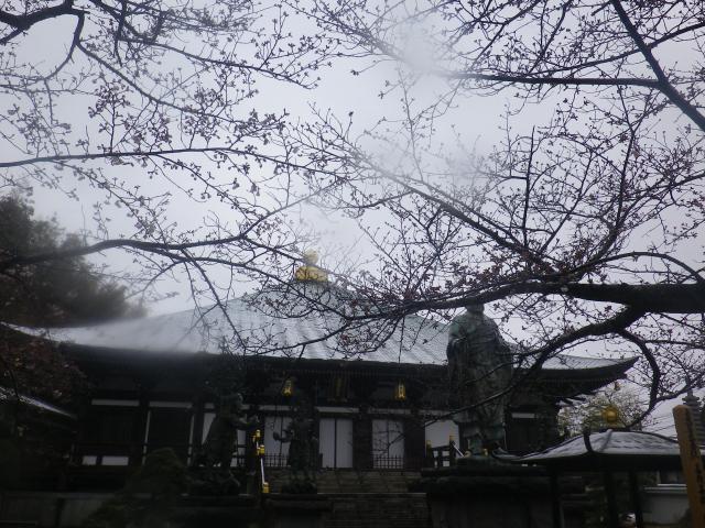 04))    18.03.21 鎌倉「長勝寺」桜の開花寸前に雪が降った春彼岸の中日