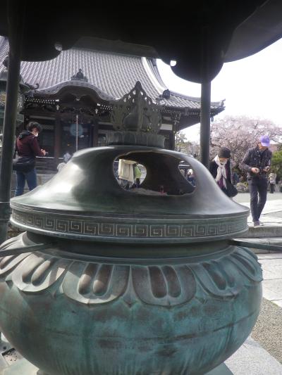 01)    18.03.24 鎌倉「本覚寺」の枝垂れ桜