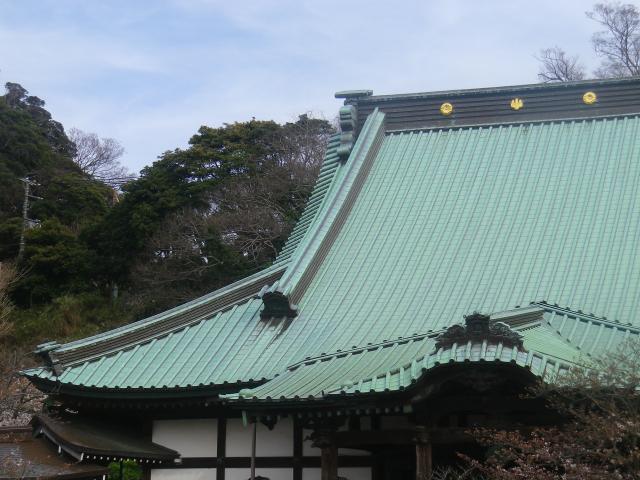 06)    18.03.24 鎌倉「光明寺」の桜が開花