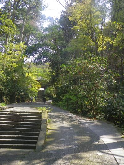 01)    18.03.28 鎌倉「妙本寺」の桜