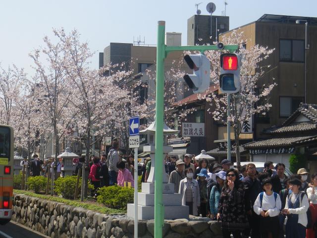 03)   18.03.28 鎌倉「鶴岡八幡宮」満開の桜