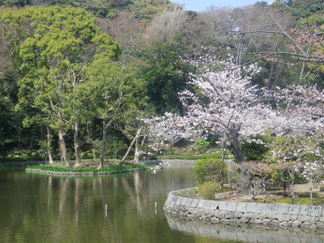 04)   18.03.28 鎌倉「鶴岡八幡宮」満開の桜