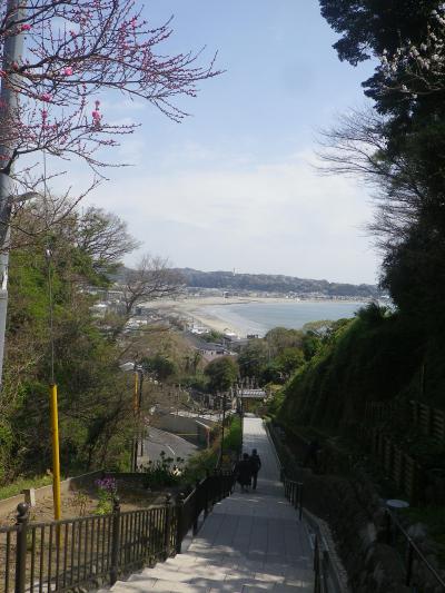 02-1) 振り返って、いつもの お約束? 写真   18.03.30 鎌倉「成就院」桜が咲く頃